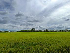 稻田村庄图