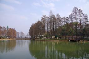 湖北武汉大学风景