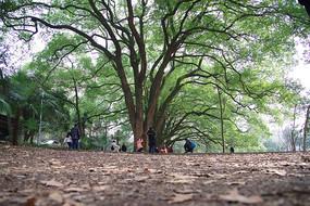 武汉大学校内的树木植被