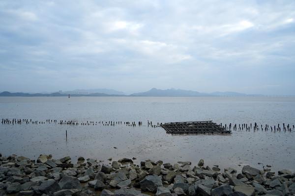海水退潮深圳湾