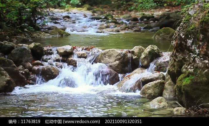 树林里的小石河图片