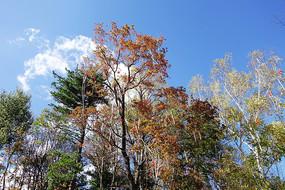 亚布力景区彩色树林红灯笼