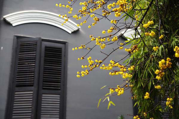 梅花与建筑窗口