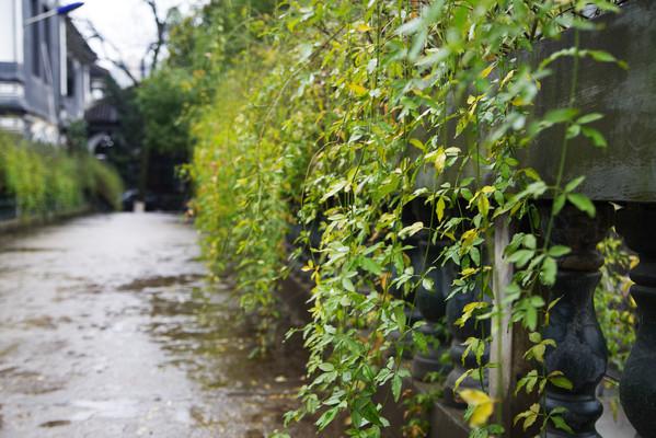 校园里的绿色植被